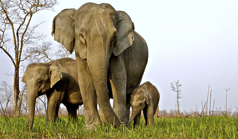 Indische Elefanten Nationalpark Reisen